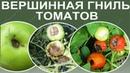 Болезни томатов Вершинная гниль томатов Почему чернеют плоды помидоров снизу