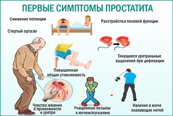 Простатит и его лечение у мужчин лекарство от простатита животных
