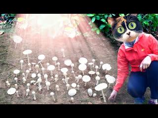 Как вырастить грибы у себя под домом! эксперимент.