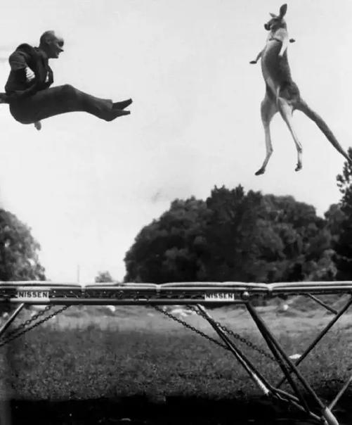 Изобретатель батута Джордж Ниссен прыгает на своем детище с кенгуру. США, 1960 год.