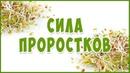 СИЛА и польза Проростков Концентрат Жизни
