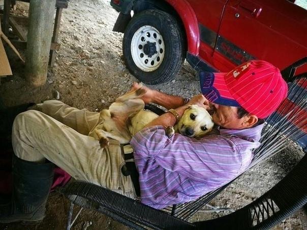 В Коста-Рике собака выпрашивала помощь у прохожих, потому что у ее хозяина случился сердечный приступ