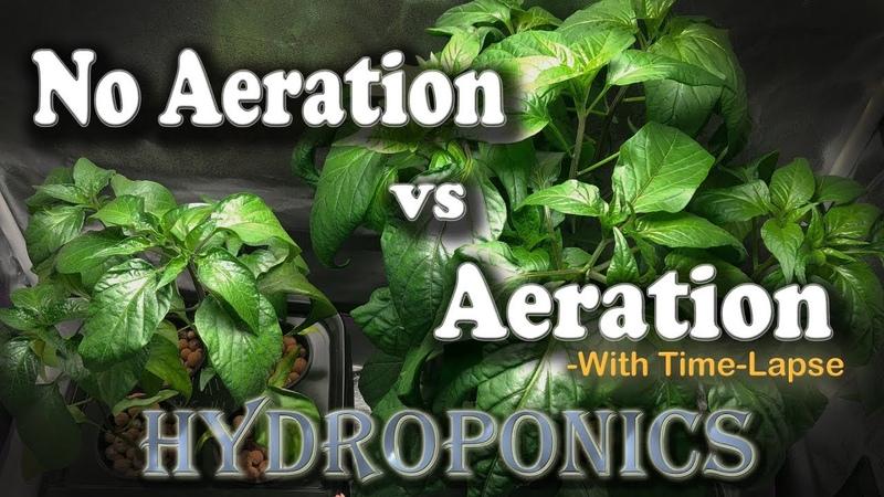 """Aeration vs No Aeration - Hydroponic Peppers wTime Lapse (Brinno) """"Semi-DWC vs Kratky"""""""