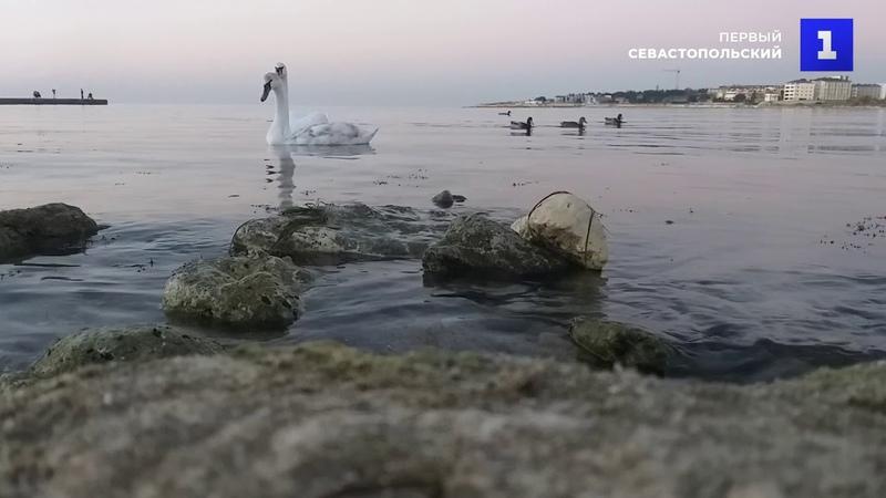 В бухте Омега появились два лебедя