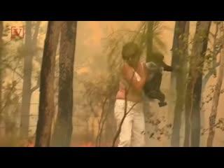 В Австралии женщина спасла маленькую коалу из пожара, рискуя собственной жизнью