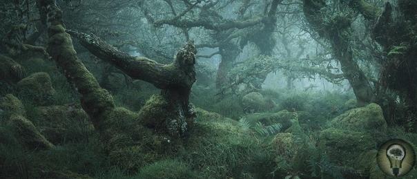 Мистические фотографии очаровательных английских лесов.