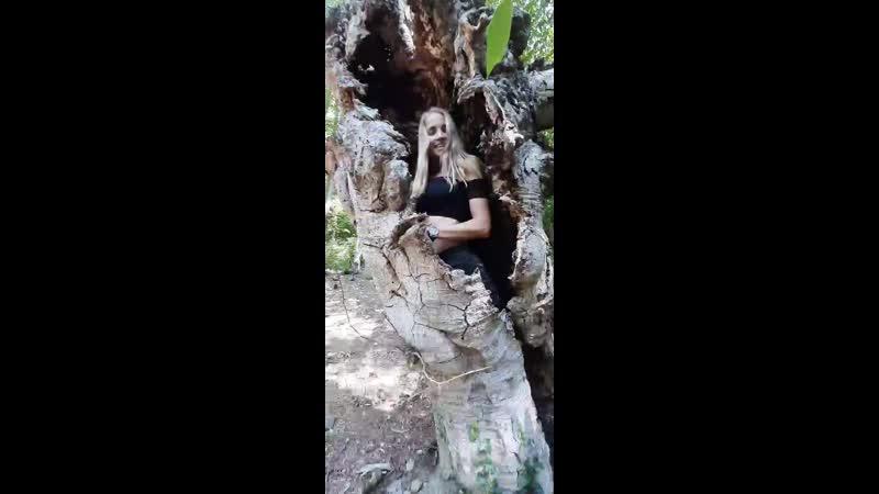 Буковый лес и русалки mp4