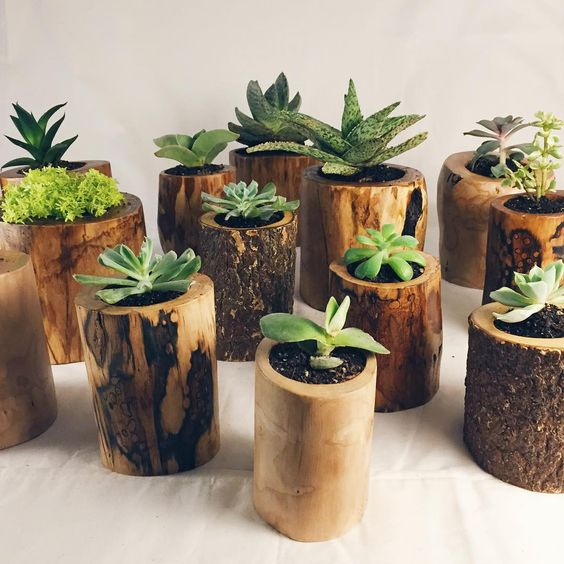 Идеи и принципы создания необычных комнатных садов: подбор растений и горшков