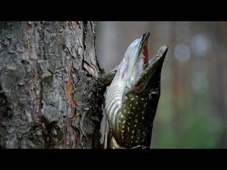 Кемпинг на берегу озера,ловля щуки на воблер,свисток из ветки ,чай из чаги,тест щепочницы.