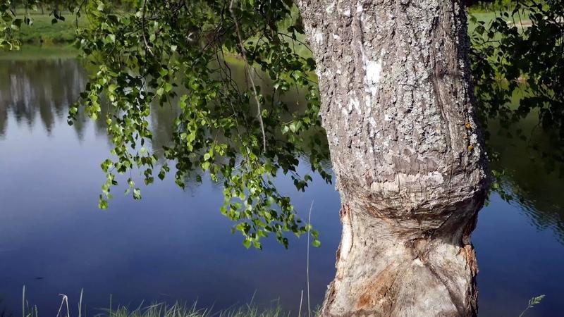Прогулка в лес за грибами весной 2019 Красивая природа средней полосы России Музыка для души
