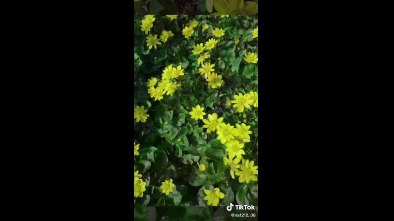 VIDEO 2020 04 03 09 31