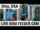LIVE Bird Feeder Cam Akron Ohio Cardinals goldfinches