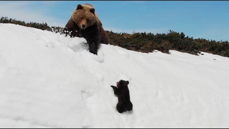 Магаданский медвежонок несмотря на все трудности выжил