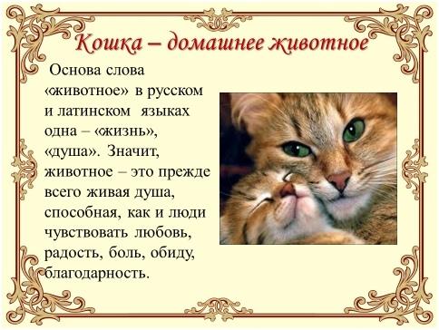 Урок доброты «Эти удивительные кошки», изображение №2