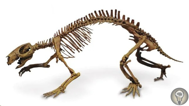 На Мадагаскаре обнаружили останки древнего «безумного зверя» с уникальными зубами