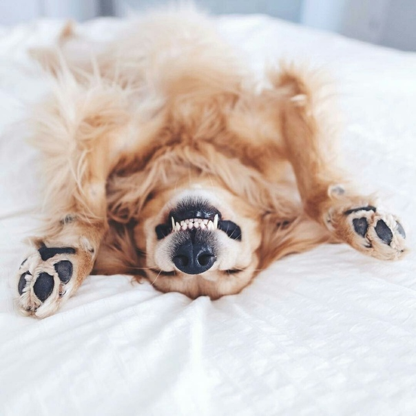 как картинки с собакой доброго утра сюжетов произведений эшера