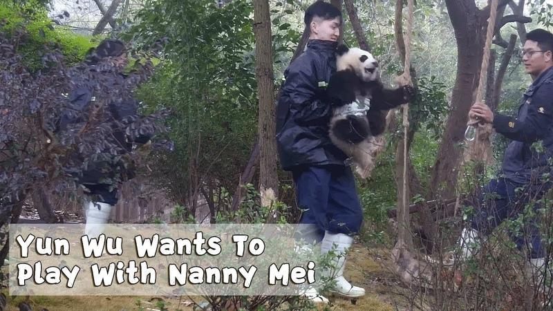 Yun Wu Wants To Play With Nanny Mei iPanda