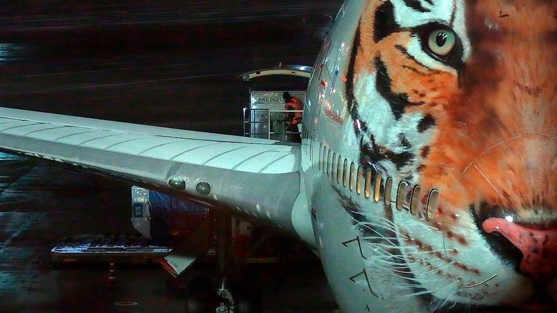 Боинг 747 Тигролет отметил 3 года и улетел на Гоа Аэропорт Внуково 2019