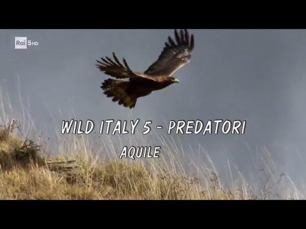 Wild Italy 5 predatori 1° aquile
