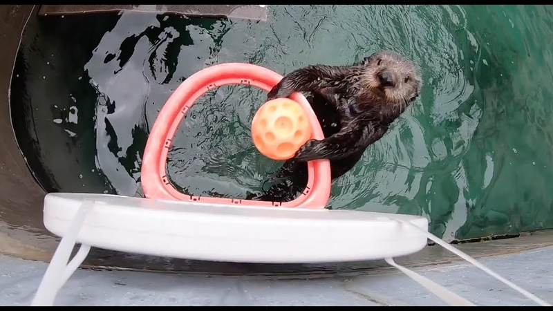 Best Dunker EVER Challenging a real Globe OTTER with a real Globetrotter