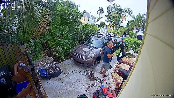 Бдительная американка вызвала полицию, приняв возгласы попугая соседа за домашнее насилие