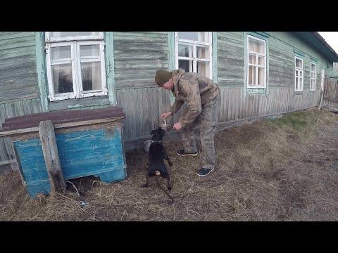 КУПИЛ ХУТОР в ЛЕСУ на краю БОЛОТА. Часть 8. Жизнь на хуторе. Белорусская кухня.