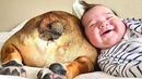Adorable Babies Playing With Dogs - Baby and Pet Video