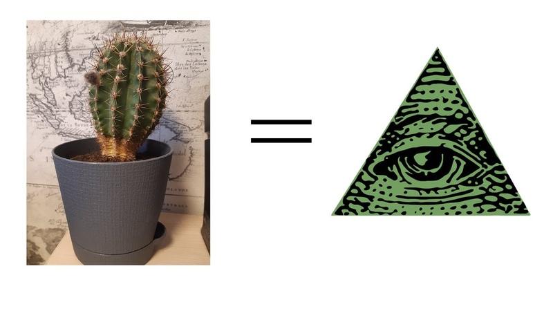 мой кактус это илюминат