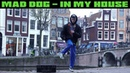 Mad Dog – In My House