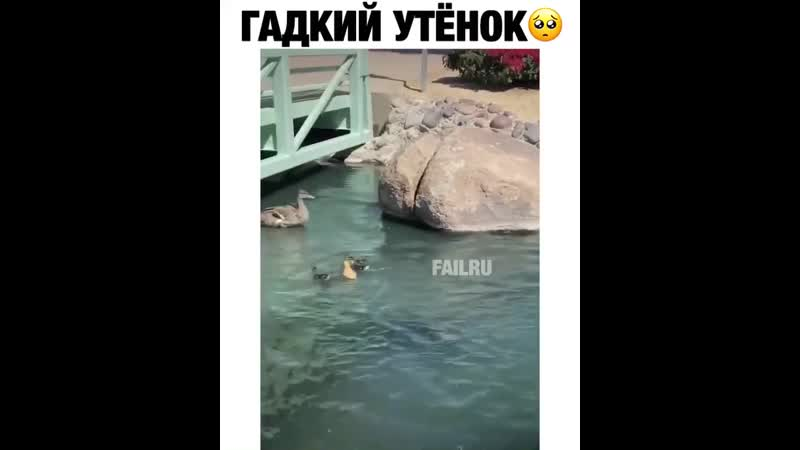 Только лучшее видео