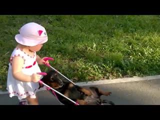 Девочка собачку катает