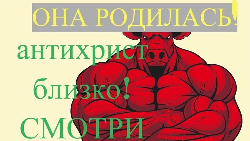 родилась рыжая телица апокалипсиса - антихрист близко, СМОТРИ!