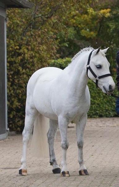 Кайли Дженнер купила пони для своей дочери. Мисс Дженнер подарила своей двухлетней дочери Сторми пони по имени Frozen, стоимостью $200.000 , $10.000 за перевоз в штаты из Нидерландов. На данный