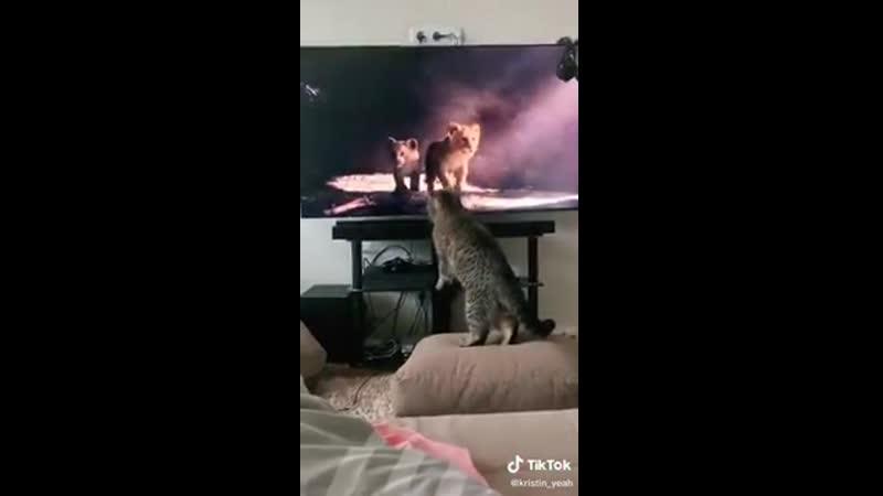 Последний король лев фильм действительно привлекает вас