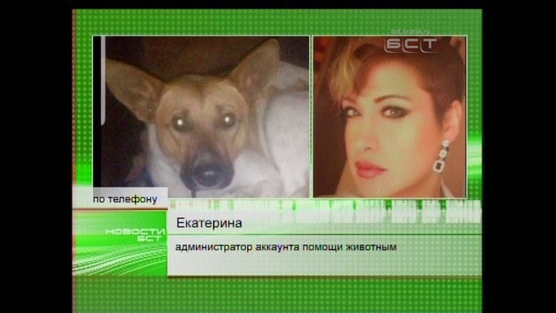 В Братске рожающую собаку избили юные живодёры