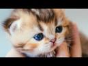 Приколы с котами Смешное про животныхВидео про котовКошкиПозитивСоздай себе хорошее настроение