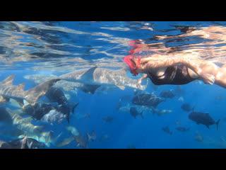 Над водой и под водой на Мальдивских островах