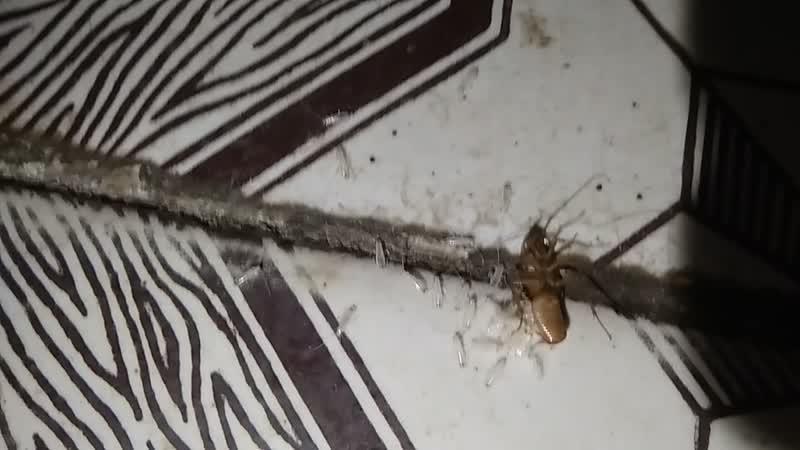 Рождение таракана