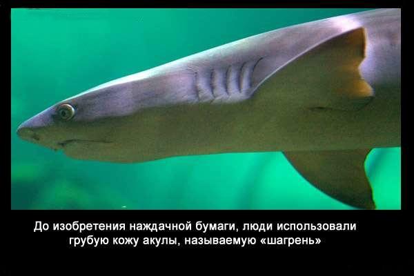 Valteya - Интересные факты о акулах / Хищники морей.(Видео. Фото) - Страница 2 BoAF27-bEG0