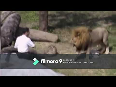 Top scary animal attacks