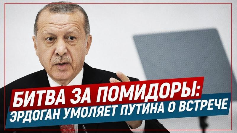 Битва за помидоры Эрдоган умоляет Путина о встрече (Telegram. Обзор)