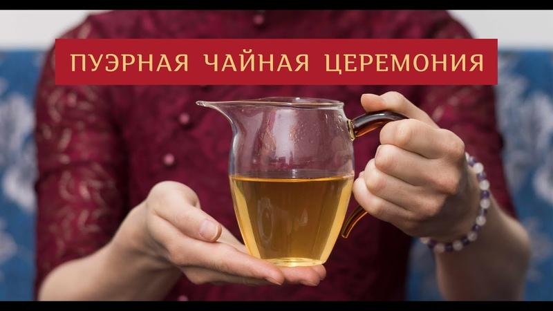 Мастер Чая ● Пуэрная чайная церемония, Шен-Пуэр 2013 г, Гушу, Линцзан