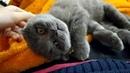 котенок видеоскотиками кот Очень крепкий сон у котенка, что аж страшно