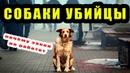 Бродячие Собаки нападают на людей   Почему закон о животных не работает. За и против