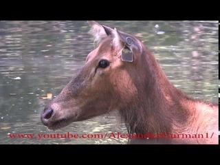 Bronx zoo animals 2020 with Garik