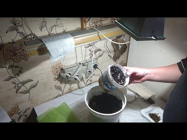 Про червей домашняя мини вермиферма Часть 2