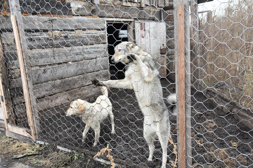 «Собачий» вопрос, изображение №5