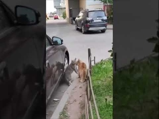 КОШАЧИЙ МОРТАЛ КОМБАТ / Shorts