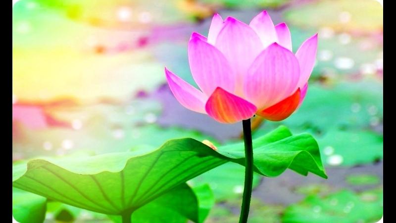Как вырастить планету 2 серия Сила цветов