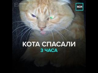 Рыжий кот застрял в вентиляции одного из домов Екатеринбурга  Москва 24